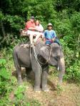 phuket_island-elephant_trekking
