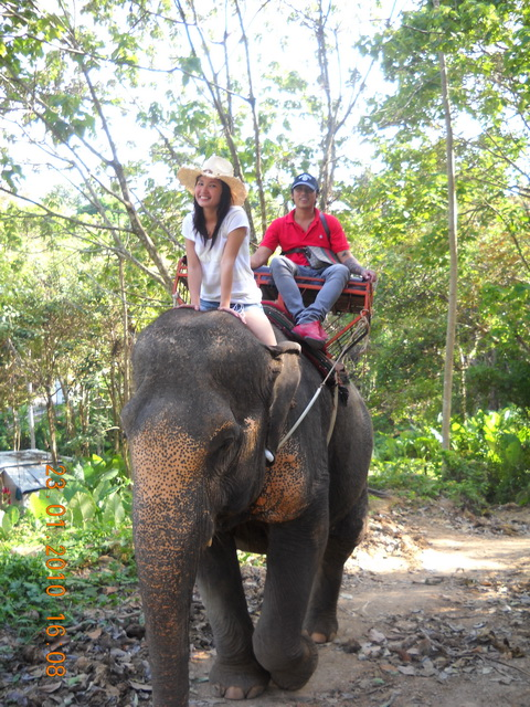 Elephant Trekking phuket taxi