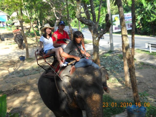 Phuket Elephant Phuket Taxi