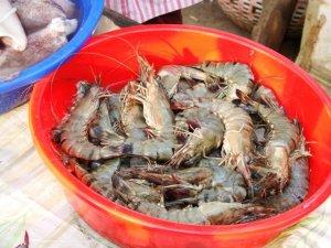 tiger prawns Phuket